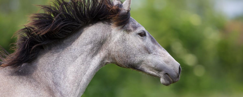 SICAB 2017 - International Pferdes Reiner Spanischer Rasse Show:  14-19/11/2017